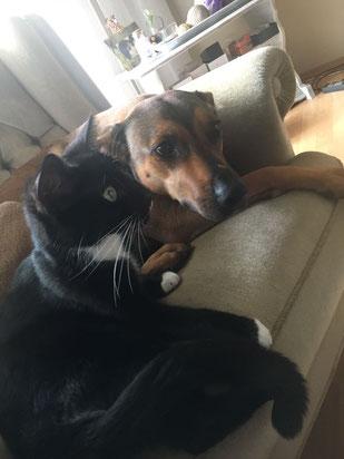 Ace und Moka, Foto vom Halter