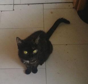 Lucy, Foto vom Halter