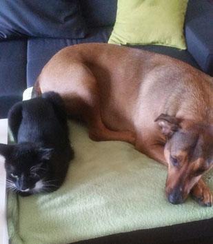 Ace und Moca, Foto vom Halter