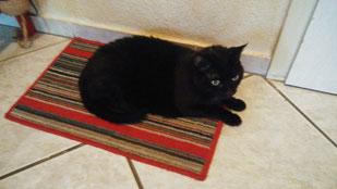 Katze Kacki, Foto vom Halter