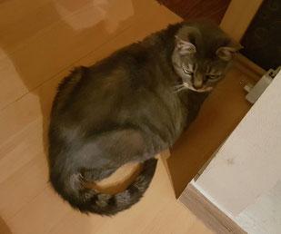 Katze Mietz, Foto vom Halter