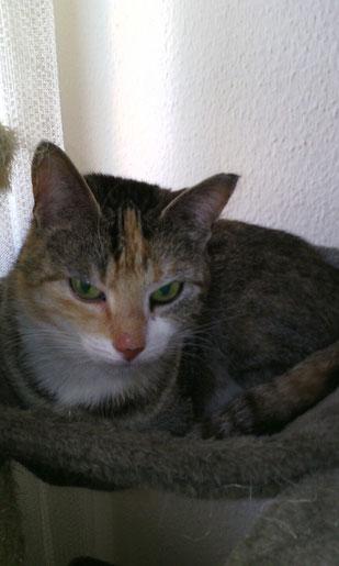 Katzendame Gismo ist wieder gesund