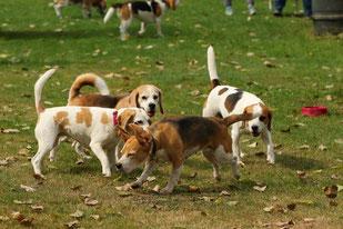 Beaglespielplatz, Foto: Könen