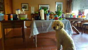 Lotta und der Tuppertisch, Foto: W. Lucht