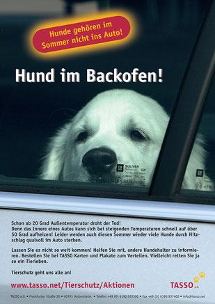 Tasso-Plakat Hund im Backofen