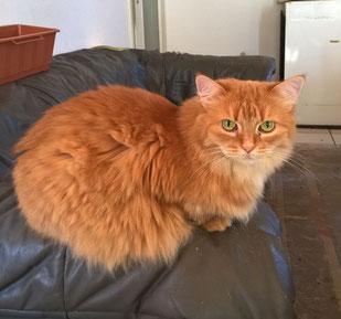 Katze Meuschen, Foto vom Halter