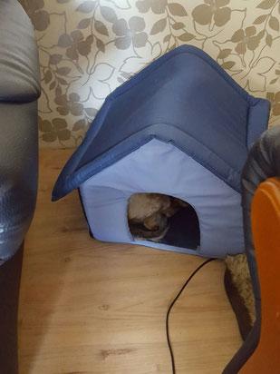 Tapsy in ihrer neuen Hundehütte
