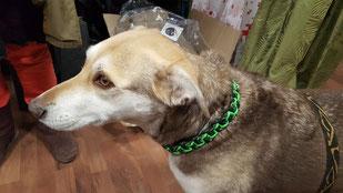 Mia mit neuem Halsband, 21.01.2017, Foto: Oetken