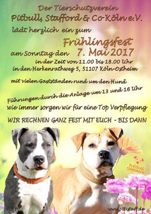Plakat Frühlingsfest von Pitbull, Stafford & Co