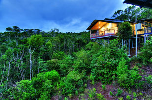 Brisbane Hotel Empfehlung: O'Reilly's Rainforest Retreat