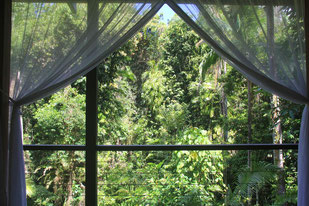 Cairns Hotel Empfehlung: Silky Oaks Lodge