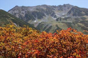 紅葉したナナカマドと立山