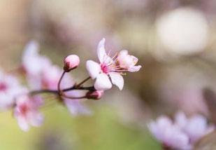 Blume Flourish 12 Wochen Coaching Programm für Frauen