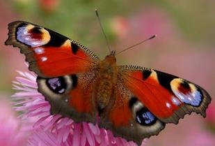 Geduld - Die Geburt des Schmetterlings