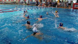 Die SSG Weil am Rhein hat wieder ein Mini-Wasserball-Turnier veranstaltet, an dem vier Mannschaften teilnahmen. Foto: zVg/Tobias Brodda