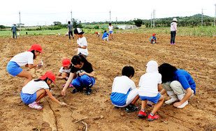 裸地にひまわりの種をまく生徒と、指導する農高生とプロジェクトメンバー