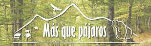 """""""Más que Pájaros"""", ecoturismo y naturaleza. Ponemos a tu alcance toda la riqueza natural de la Península Ibérica a través de una experiencia ecoturística diferente y de calidad."""
