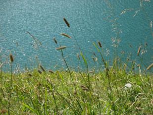 Grünes Gras durchzogen von zarten Gräsern und Kräutern an einem Seeufer. Das Wasser glitzert in der Sonne. Leichter Wellengang kräuselt das Wasser. Das Foto strahlt Leichtigkeit und Ruhe aus. Entspannung durch fließende und wiegende Bewegu