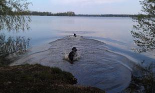 Beide Hunde im Wandlitzsee