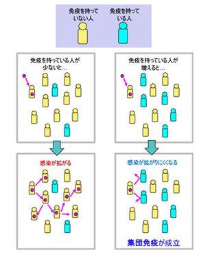 集団免疫が成立する仕組み