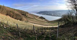 Rheingau et le Rhin