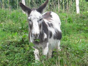 Esel im Wendland Cindy