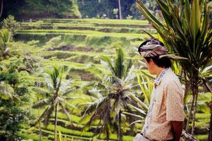 Bauer in den Reisterrassen von Ubud