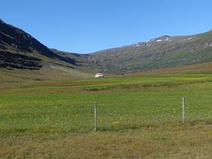 Paysage sans reforestation en Islande