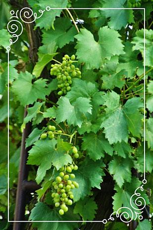 Der Weinort Mehring