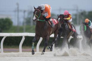 タガノジンガロ号と鞍上の木村健騎手