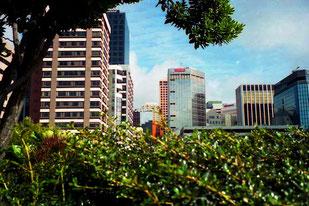 Blick in die grüne City von Wellington