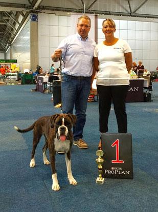 Karla  in Leipzig Boxer Hund vonderwaldnielerheide Ausstellung