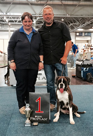 German Winner Boxer Hund vonderwaldnielerheide Ausstellung