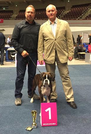 Dortmund Boxer Hund vonderwaldnielerheide Ausstellung