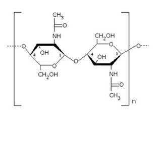 Figure 7 : Structure de la chitine