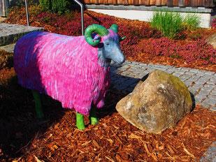 ein Heide-Schafs-Bock mit touristischer Bemalung
