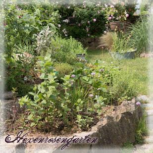 Rosen Hexenrosengarten Rosenblog Herz