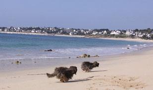 # Hummel und Feetje am Strand