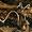Champignons autochtones.