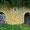 Une vierge est disposée au dessus des caves.