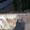 La mérule à l'oeuvre sur le bois des tonneaux.