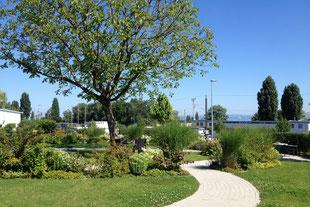 Sitzplatz im Garten, Baum, Stauden, Gräser, Rasen
