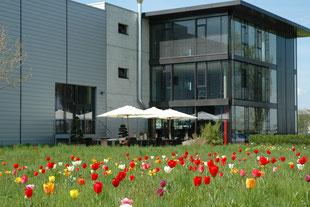 Firmenareal, Wiese mit Tulpen, bunte Blüten, Aussenbereich, Sitzplatz im Schatten, Kantine