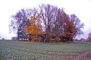 Die Ruine `Christianshof` am Ende des Nelkenwegs liegt direkt am geplanten Trassenverlauf (Bild Nov.2011)