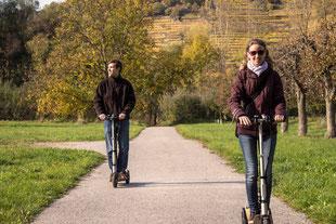 Fahrt durch die Obstbäume, Marillenbäume in Rossatz in der Wachau.