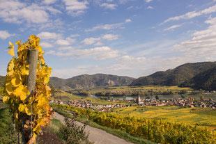 Foto auf dem Weinweg im Herbst in der Wachau. Das Erlebnis mit E-Scooter und Roller Top Ausflugsziele und Aktivitäten. Die Alternative zum Fahrrad Verleih in der Region.