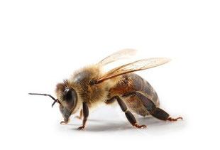 Honigbiene Honig in Gesichtspflege