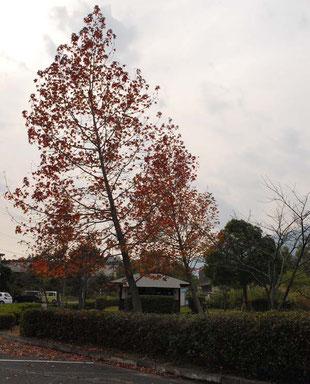 近江舞子 内湖
