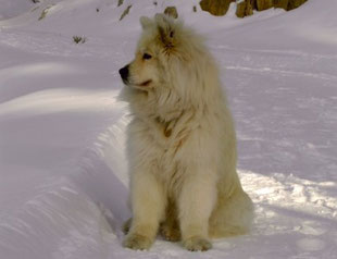 Anka im Schnee
