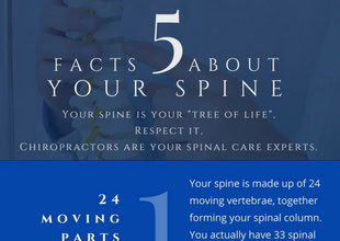 infographic-5-spine-facts